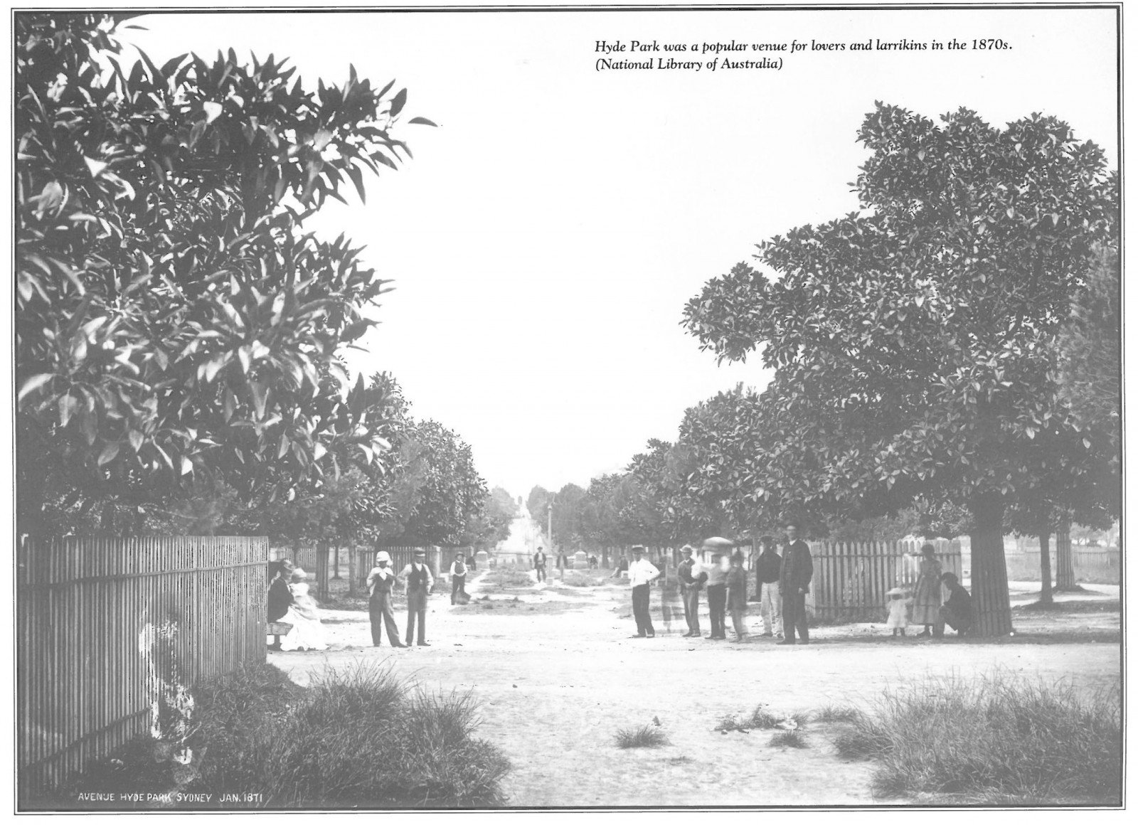 Early Moreton Bay Figs in Hyde Park January 1871 (Source : National Library of Australia)