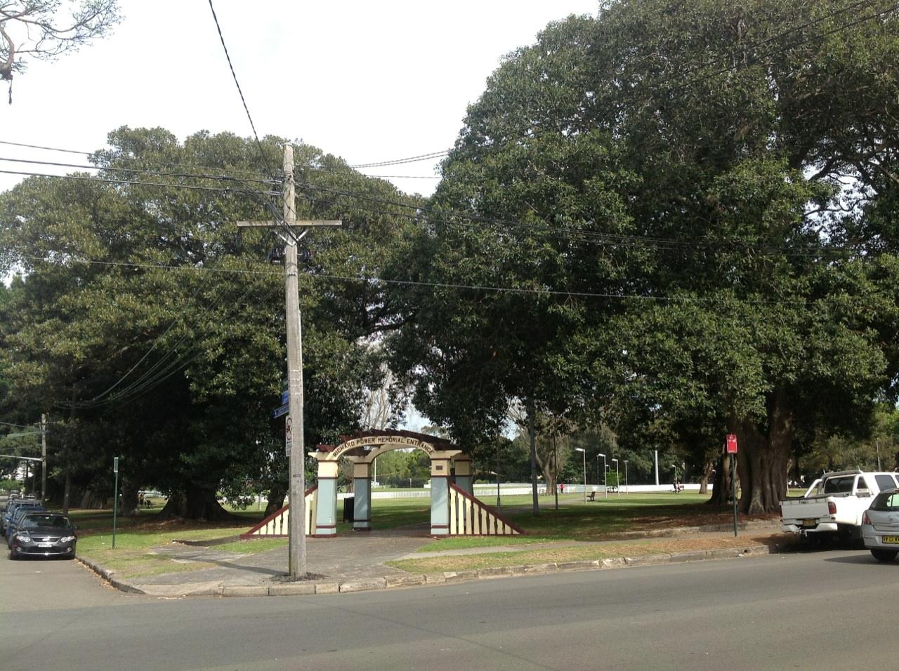 Port Jackson and Moreton Bay Figs