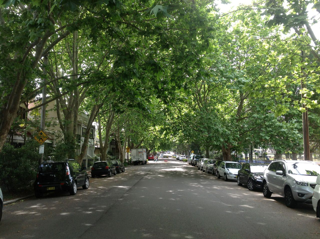 The London Plane Tree avenue along Buckland Street, Alexandria