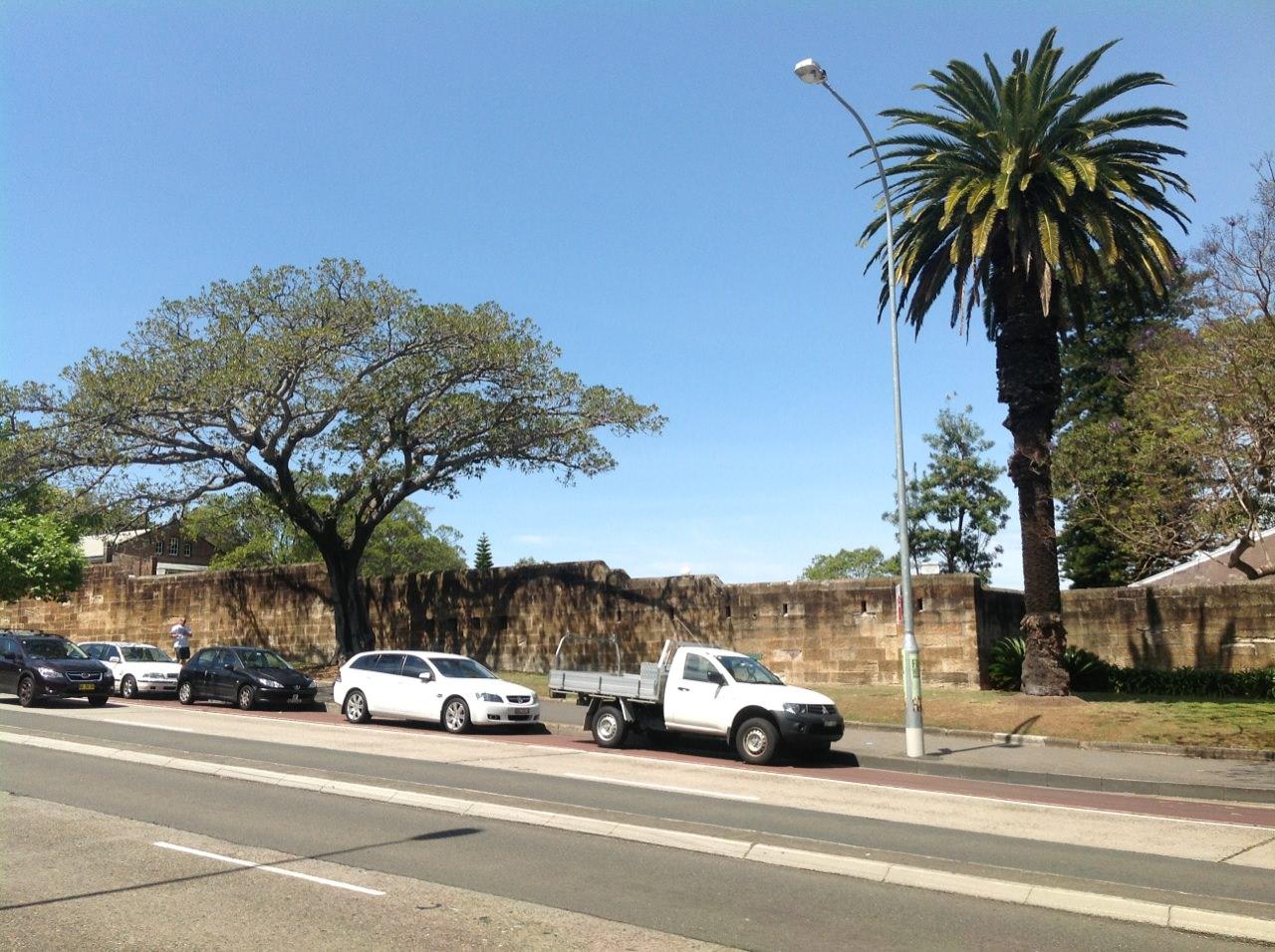 Moreton Bay Fig and Canary Island Date Palm