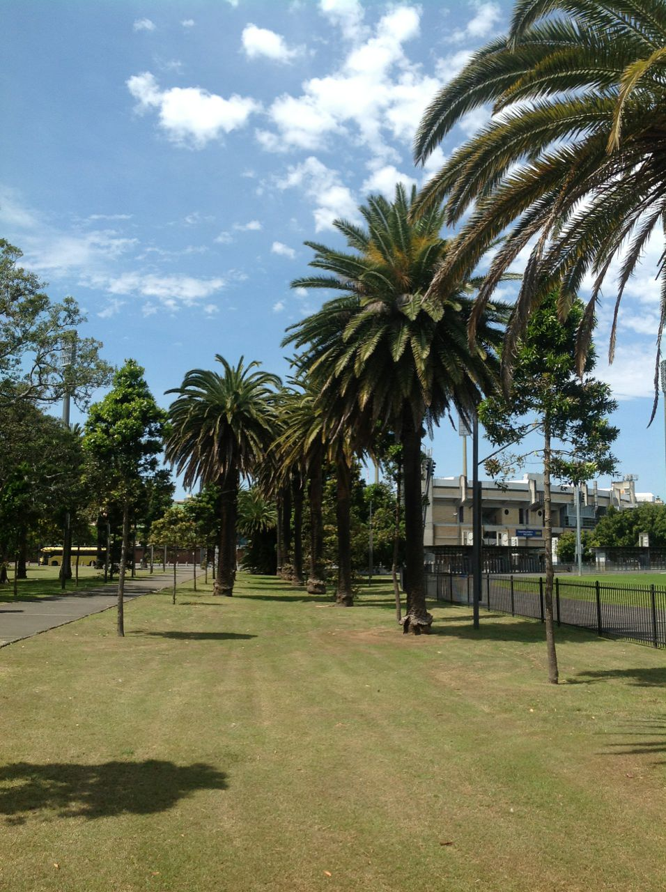 Canary Island Date Palms and Queensland Kauri Pines