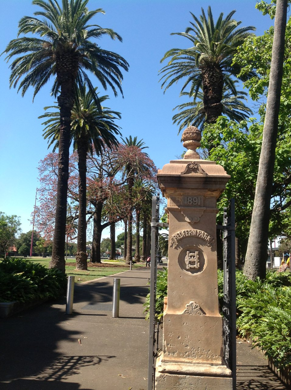 Canary Island Date Palms in Redfern Park