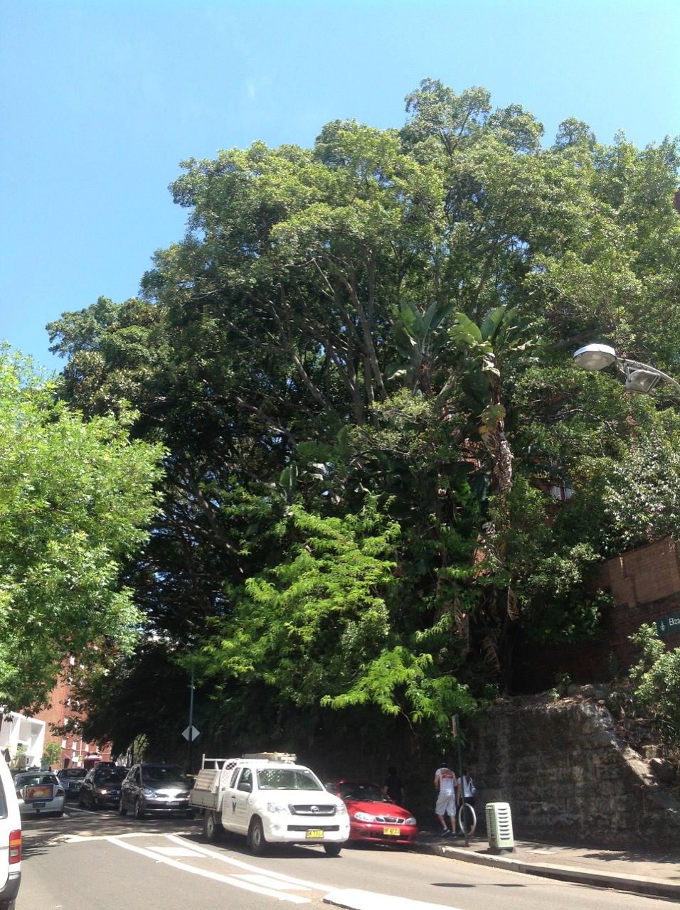 Hill's Figs