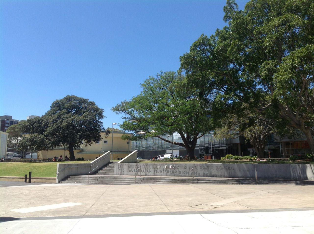 Hill's Fig, Port Jackson Fig and Podocarpus