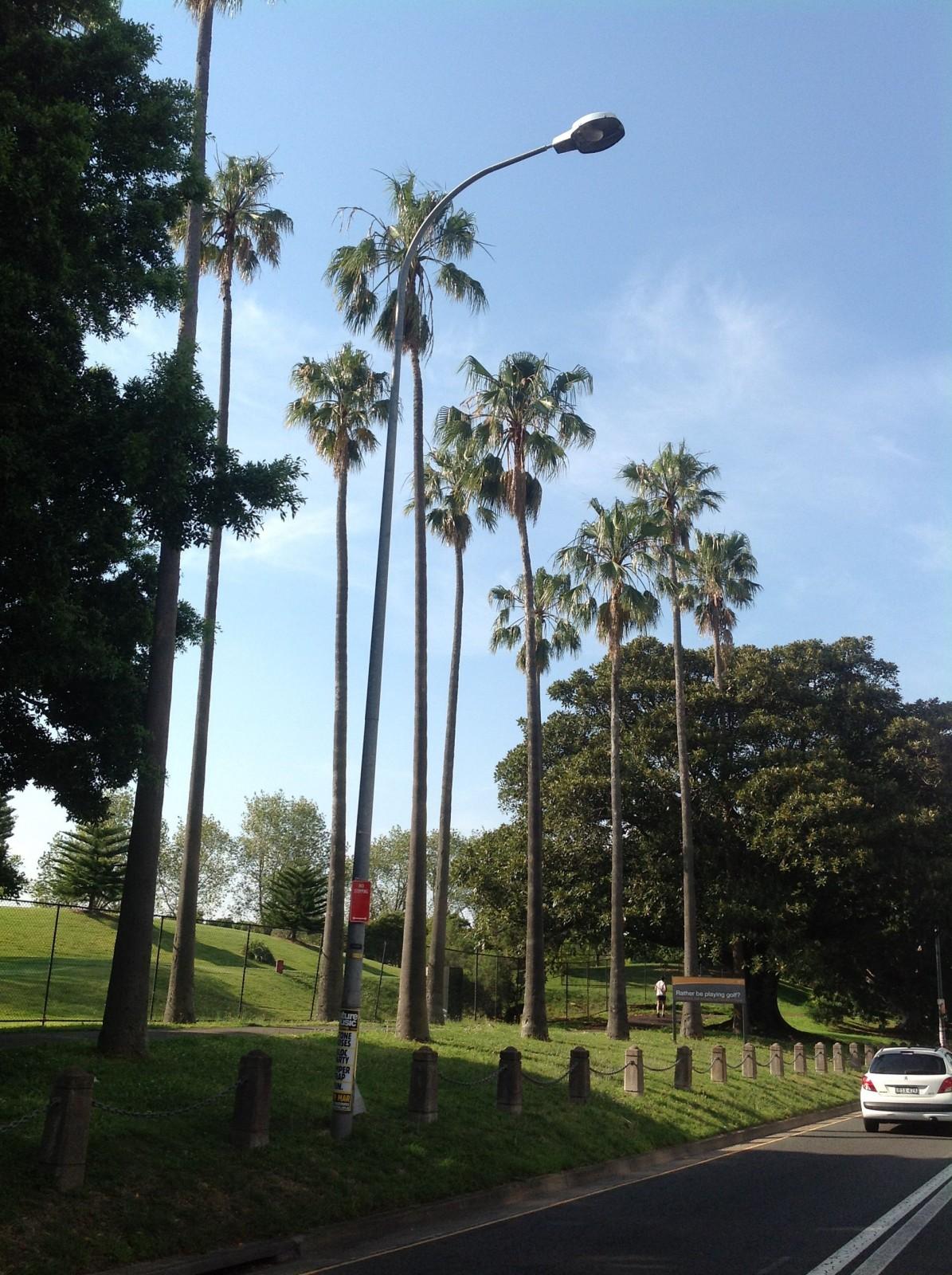 Washington Palms