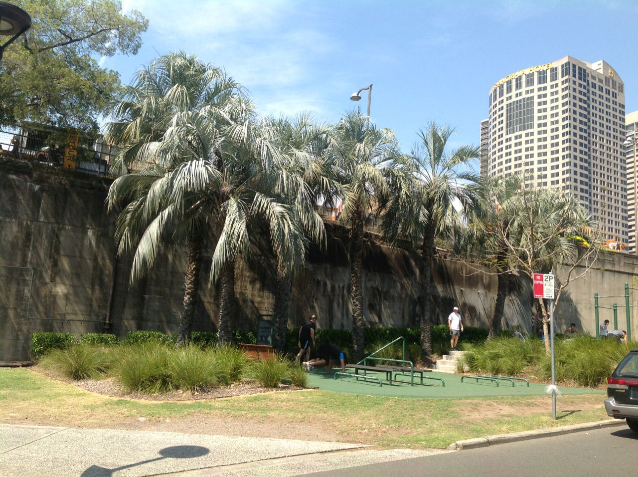 Jelly Palms
