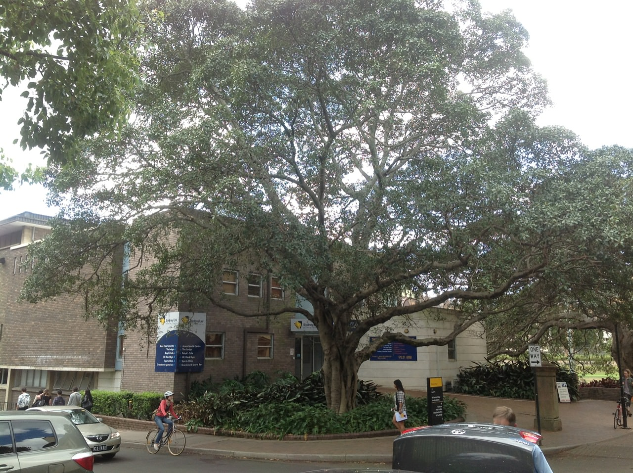 Forestry physics sydney university