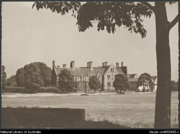 Port Jackson Fig and the Brush Box historical photo